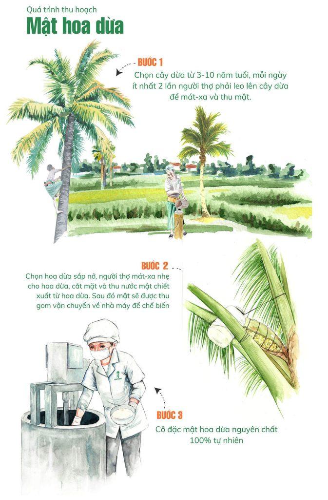 Quá trình thu hoạch mật hoa dừa Sokfarm